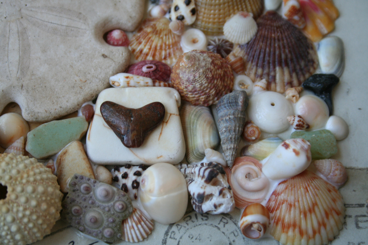 Shells close up