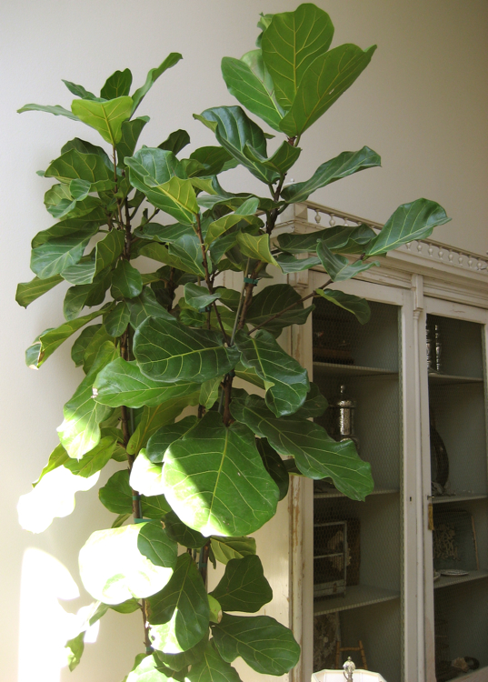Lr plant