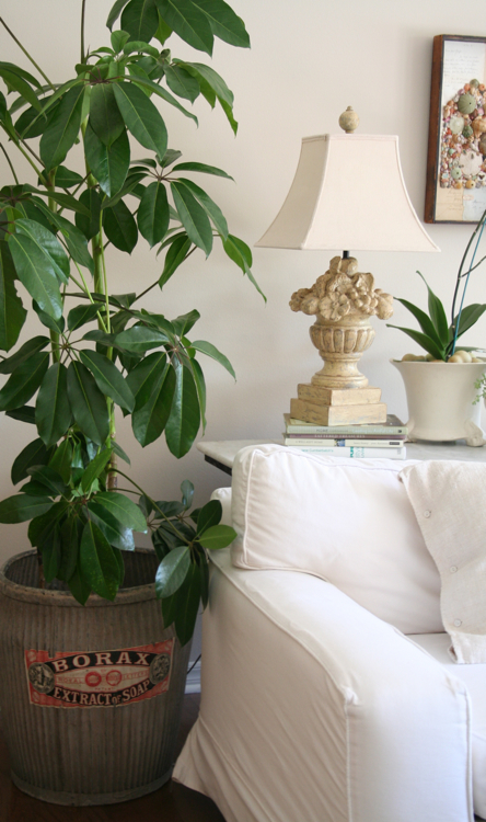 Family room plant