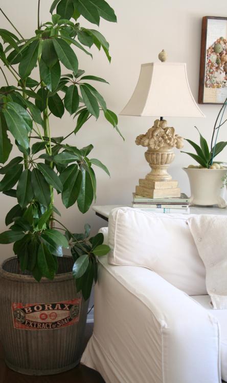 Family room plant