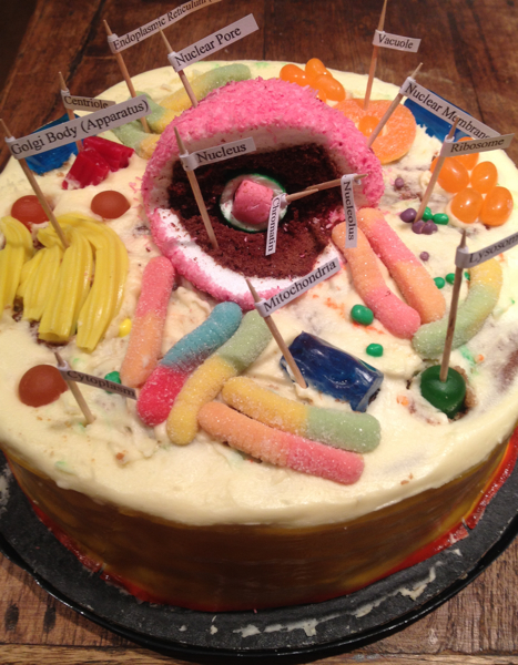 The Assignment Was To Make An Edible Animal Or Plant Cell And Label I Took My Son Let His Imagination Run Wild