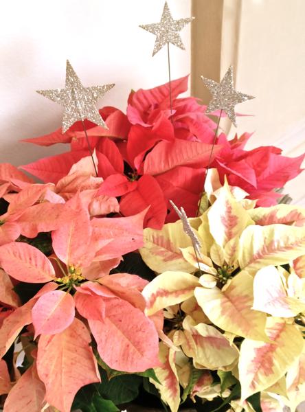 Christmas 2011 5