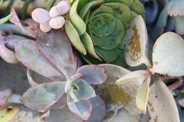 Succulent love 1