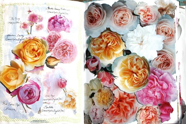 Garrison_roses 3
