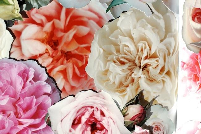 Garrison_roses2