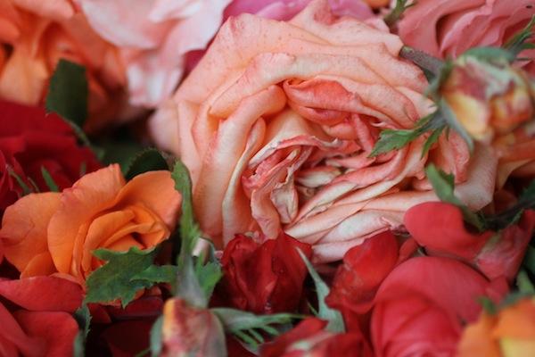 PG_roses9