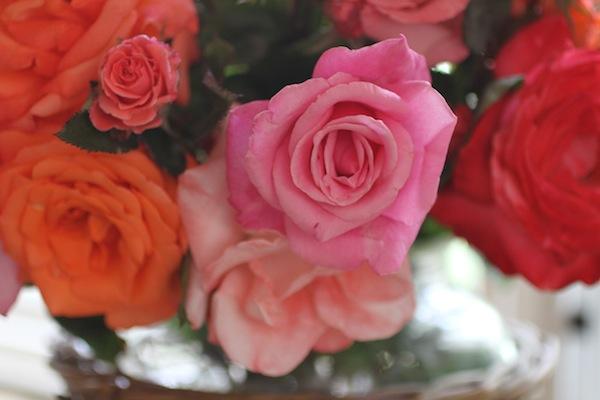 PG_roses6