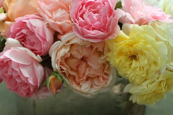 Pgarrison_garden roses