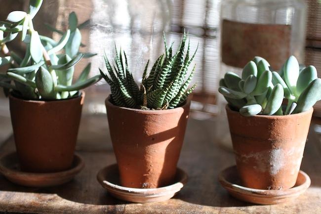 Pg_succulents