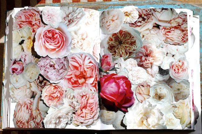 Garrison_roses 5