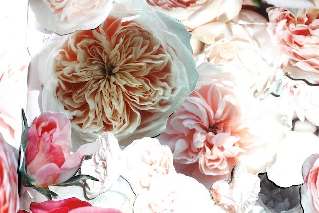 Garrison_roses1