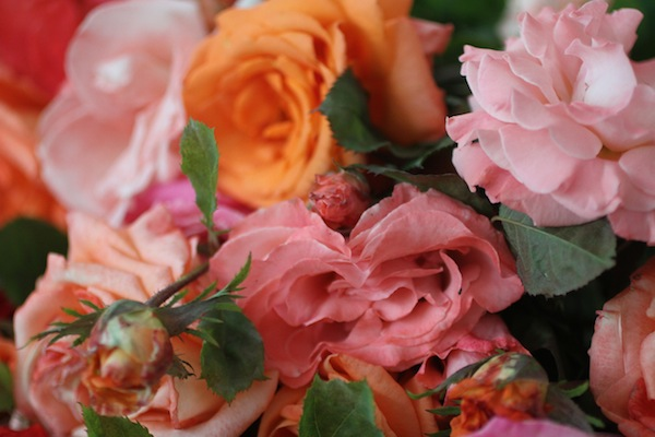 PG_roses4