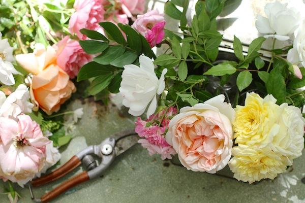 Pg_garden flowers