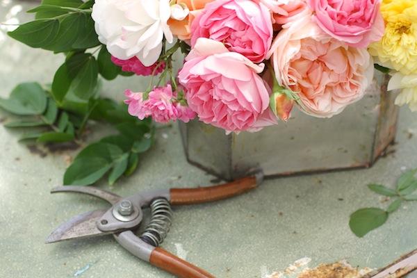 Pg_garden flowers1