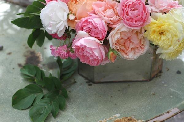 Pg_garden roses