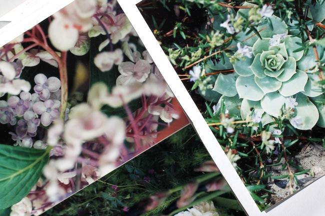 Pg_garden pics