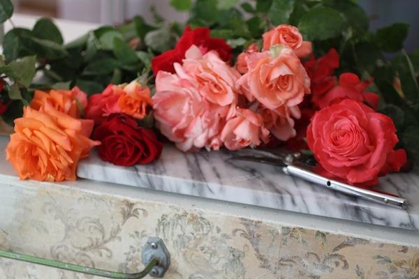 PG_roses3