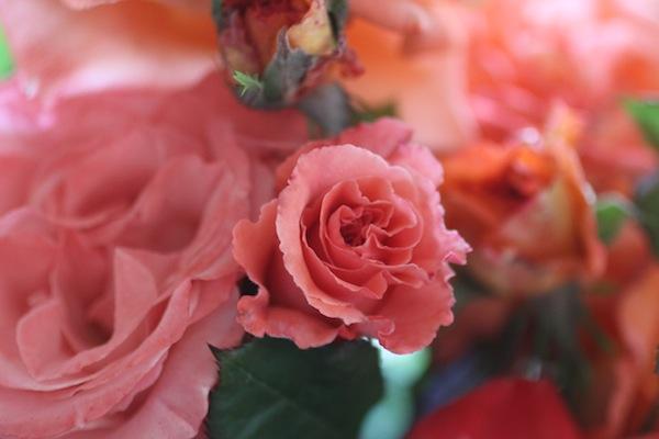 PG_roses7
