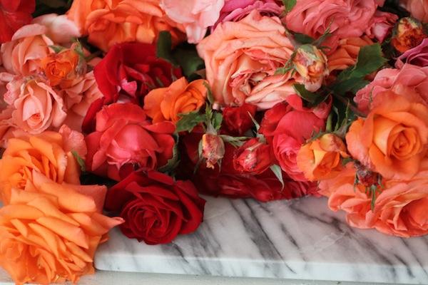 PGarrison_roses5