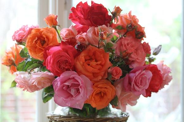 Roses arranged_PG