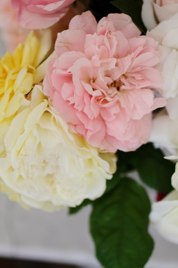 Antique garden roses2