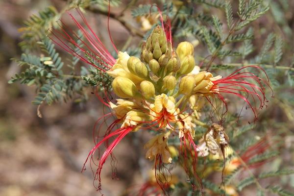 Pam flower 2