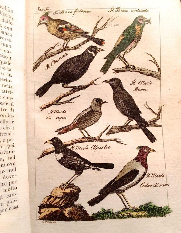 Antique bird book