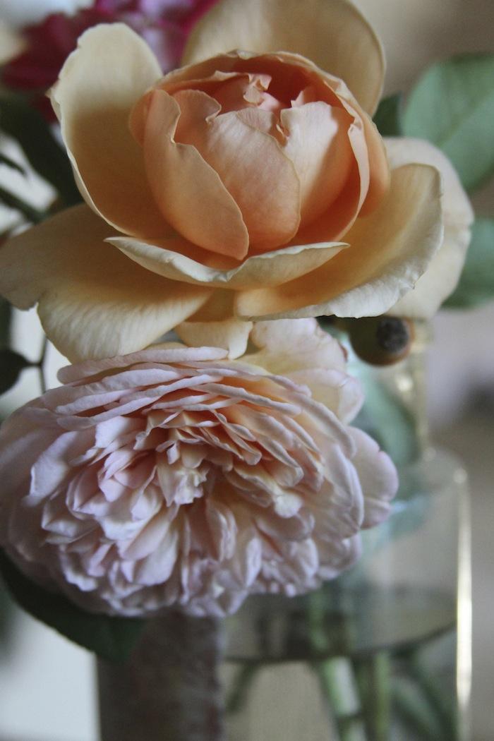 PG roses 6