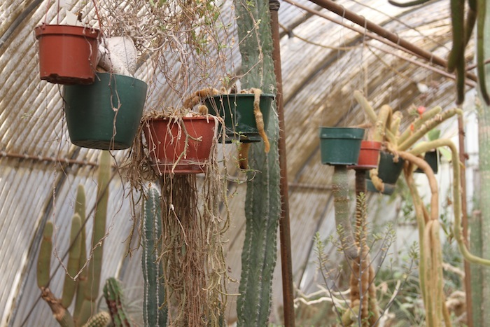 MOORTEN botanical garden 2