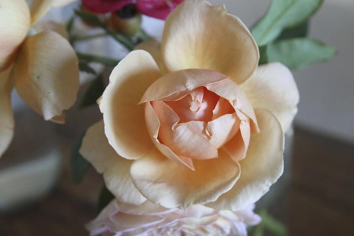 PG roses 5