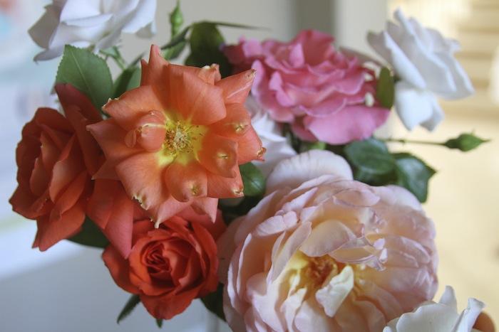 PG roses 1