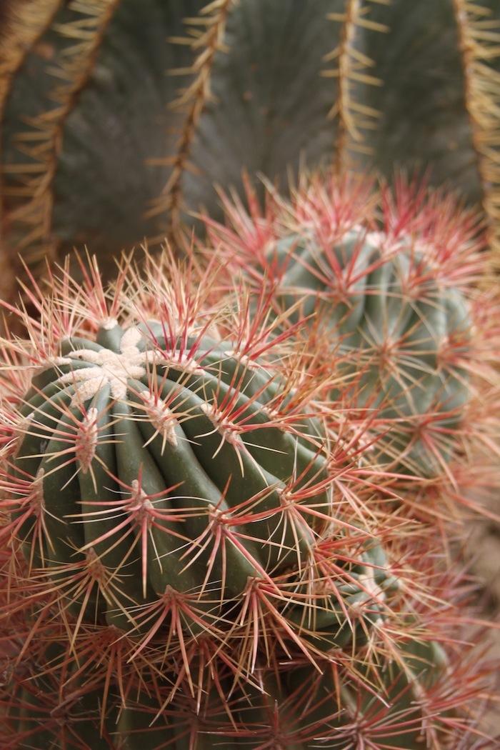 Cactus 16