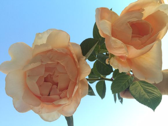 image from http://pamgarrison.typepad.com/.a/6a00d83452354569e201b7c77ea782970b-pi