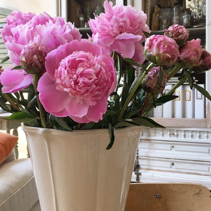 Pg pink peonies