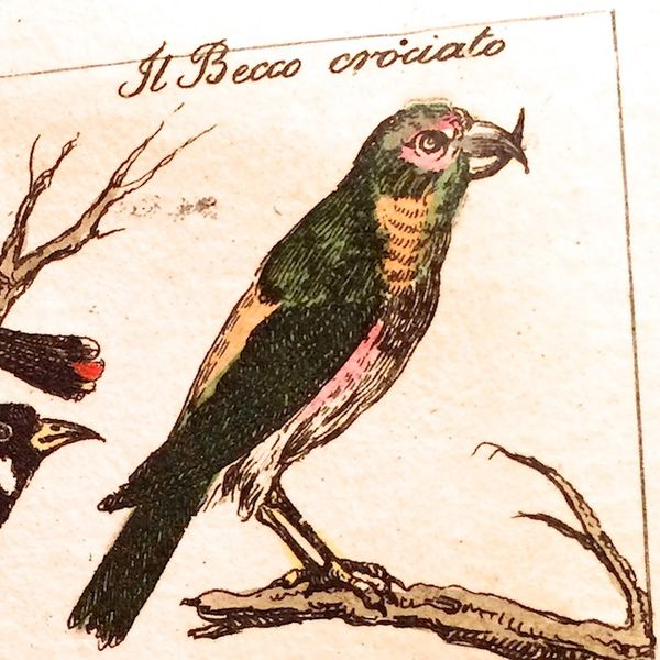 Antique bird illustration