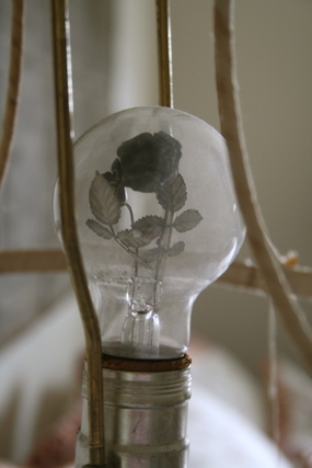 Amys_lightbulb