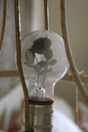 Amys_lightbulb